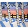 Bouleaux (hiver)