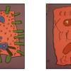 Microbes-germes
