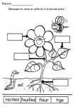 parties-d-une-plante-decoupe-et-colle