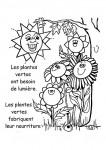 plantes-fabriquent-leur-nourriture