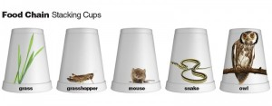 food chain cups