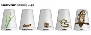 food chain cups
