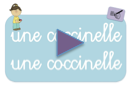 cocci